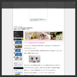 犬のアトピー・皮膚トラブルに世界初のペット化粧水