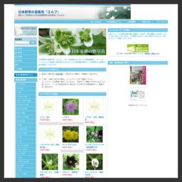 株式会社エルブのオンラインショップ『YASOO.CO.JP』は、山野草の販売店です。日本原種の野草にこだわり、野生ランや四季折々の野草の苗を販売しております。当店だけでしか手に入らない日本固有の野草の苗も沢山ご用意しております。山野草をお探しの方や茶花をお探しの方はぜひ当店をお訪ねください。