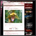 京都日めくり・絶景ウェブログ