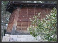 ユキ 2009/12/18